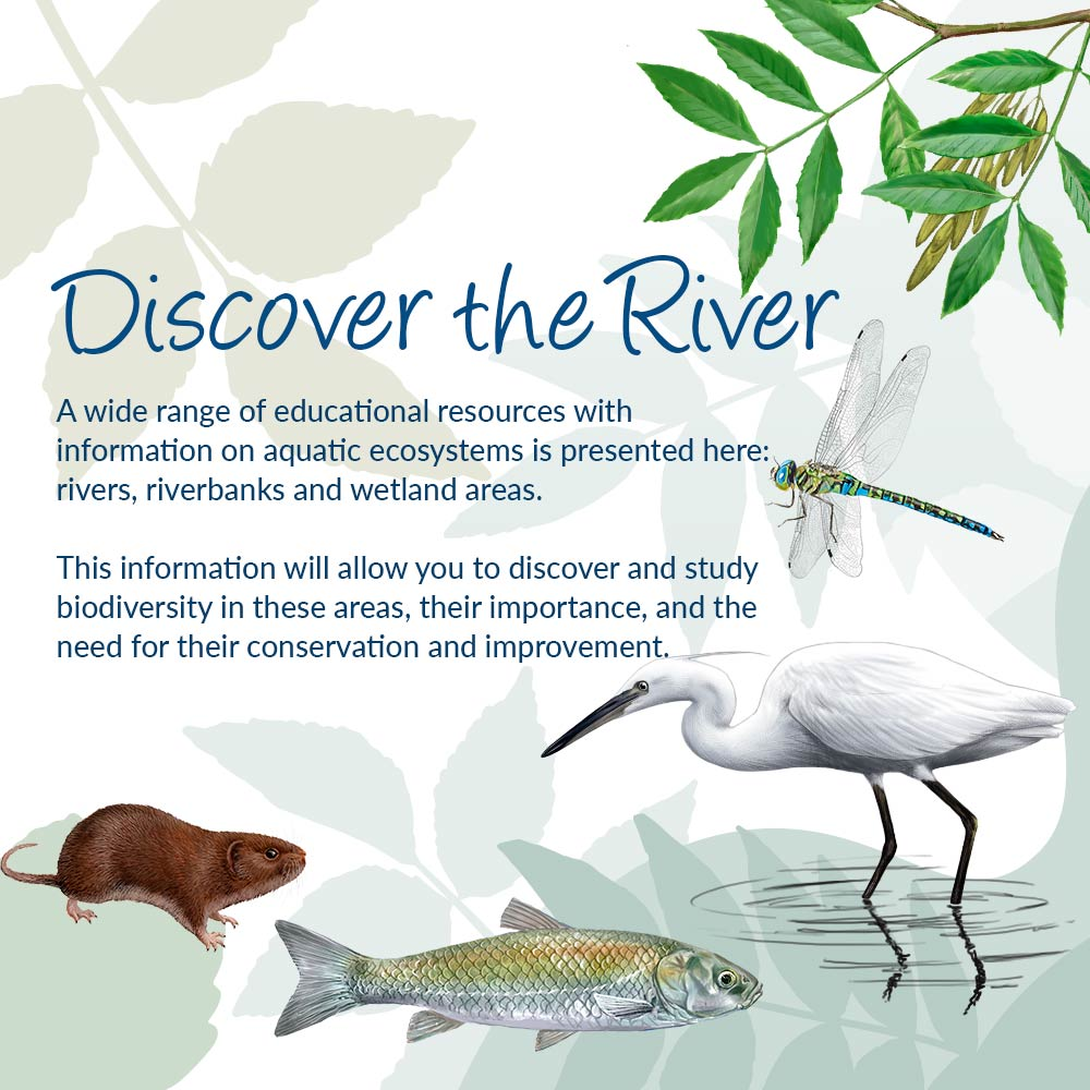 A wide range of educational resources with information on aquatic ecosystems is presented here: rivers, riverbanks and wetland areas. This information will allow you to discover and study biodiversity in these areas, their importance, and the need for their conservation and improvement.